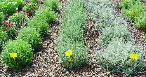 Curso Formación: «Cultivo Ecológico de Plantas Aromáticas y Medicinales»