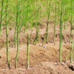 """Taller de Trabajo sobre """"Posibilidades de Cultivos Alternativos en Regadío: Espárrago Verde y Brásicas (Bróculi y Coliflor"""""""